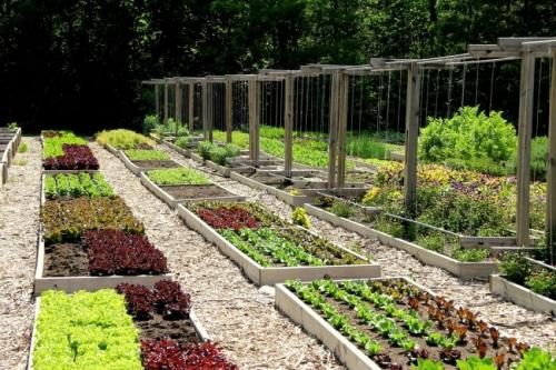 Ленивый огородник. Растения