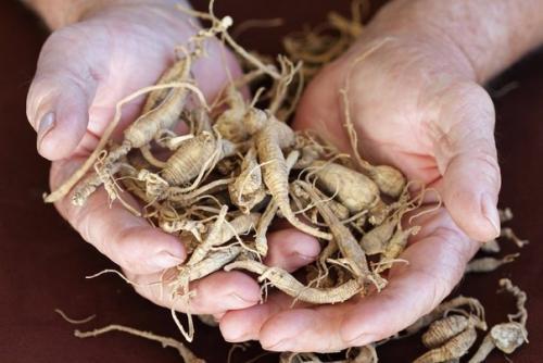 Лечение корнем лопуха и одуванчика. Целебные корни - пырей, одуванчик, лопух.