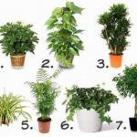 6 лучших растений для очистки воздуха внутри помещения: