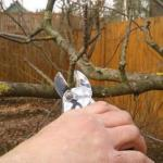 Уход за яблоней весной: что, зачем и как.