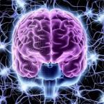 Топ - 10 продуктов, которые любит ваш мозг: