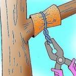 Способ, который заставит деревья плодоносить быстрее.
