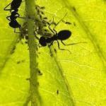 10 народных средств от муравьев!