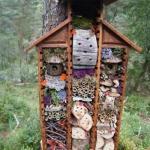 Как привлечь в сад полезных насекомых.