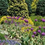 Аллярий - модный садовый дизайн.