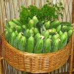 Важные советы по выращиванию огурцов.