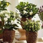 Одиннадцать способов удобрить домашние растения.