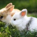 Мы выращиваем кроликов на частном подворье.