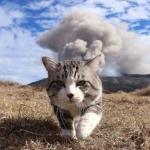 Кот - путешественник, у которого многим моделям стоит поучится позированию.