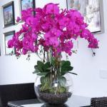 Чтобы обильно цвели орхидеи.