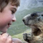 Восьмилетний Маттео вальч (Matteo Walch) четыре года назад обнаружил альпийских сурков и начал наблюдать за ними.