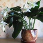 9 домашних растений вместо освежителей воздуха и Саше.