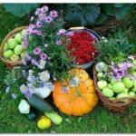 Тридцать семь хитростей для садоводов и огородников.