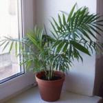 Комнатных растений, которые необходимо купить, если в квартире есть курильщик и если вам дорого здоровье.