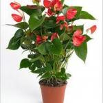 10 растений, которые принесут в ваш дом любовь, семейную гармонию и счастье.