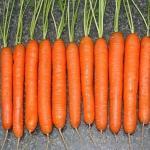 Секрет выращивания моркови!