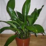 Пять самых подходящих растений для темной квартиры.