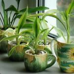 Натуральные удобрения для домашних цветов.